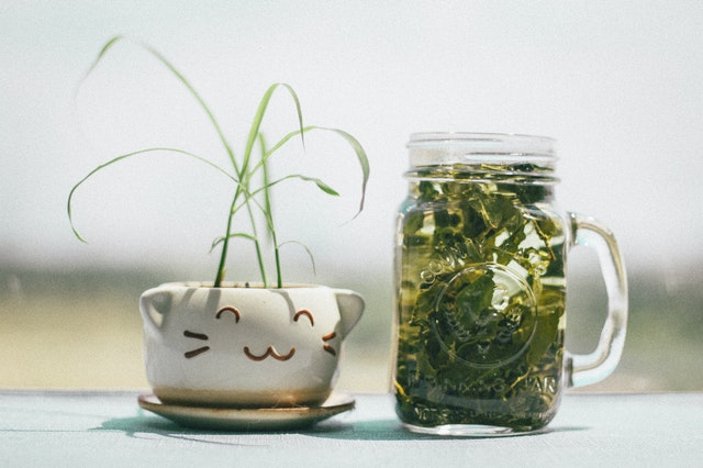 Anti-Ageing Foods You Should Eat, green tea in a mug